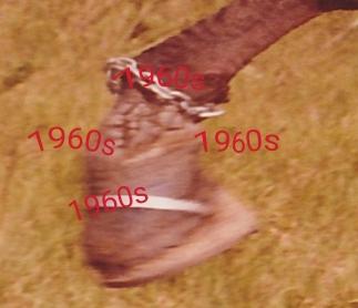 scar rule 1960s