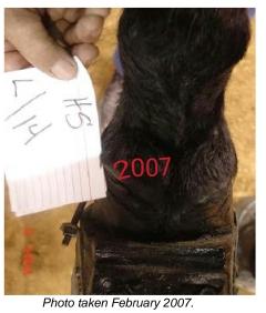 scar rule 2007